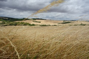 2015 July 26 - straw fields cloudy sky